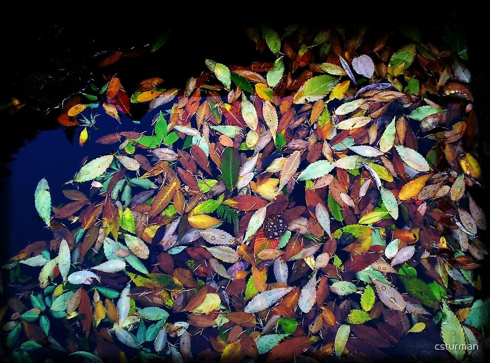 Blanket of autumn leaves by csturman