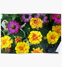 Pink and yellow flowers background Poster