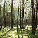 Beautiful pine forest by OlgaBerlet