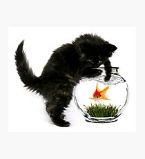 Cat catching a fish Photographic Print