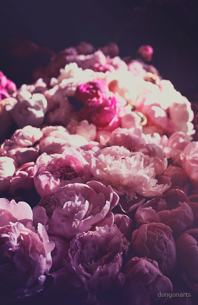 Flowers: Peonies in Pink by dunyonarts