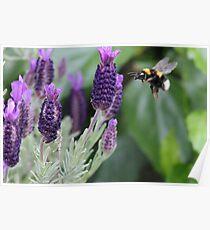 Seeking pollen Poster