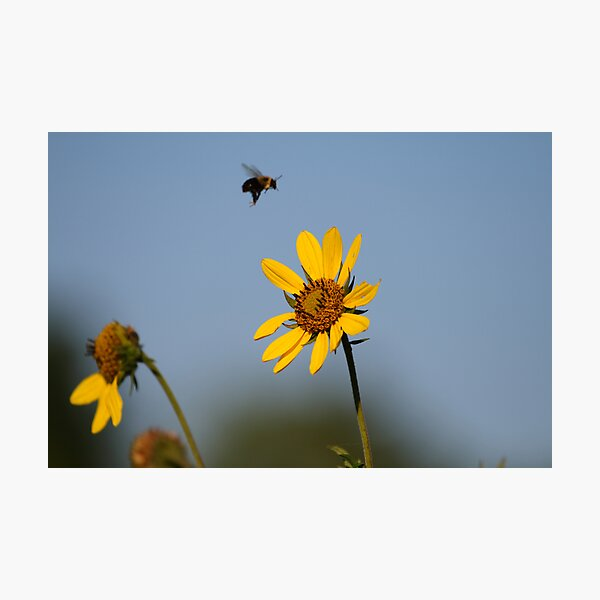 Buzzing the Tower Photographic Print
