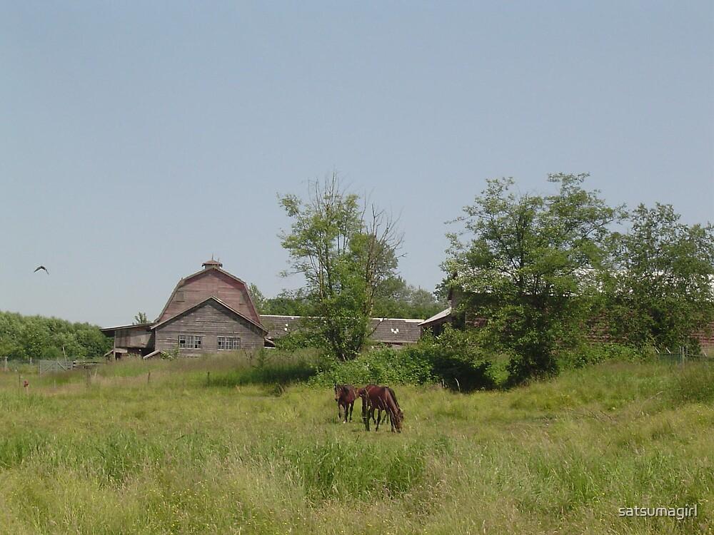 The three horses by satsumagirl