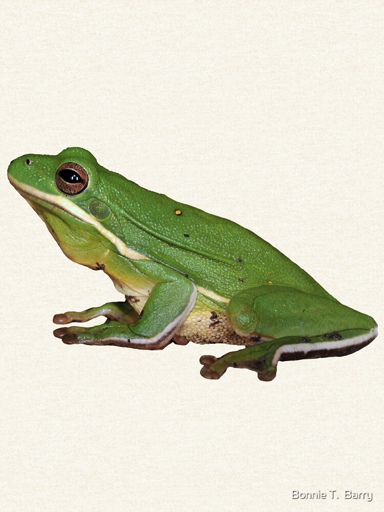 Little Green Frog by Miracles
