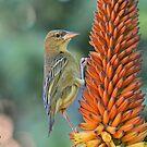 Aloe Visit!! by Macky