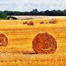 Hay bales landscape, Wexford, Ireland by David Carton