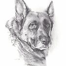 norwegian elkhound drawing by Mike Theuer