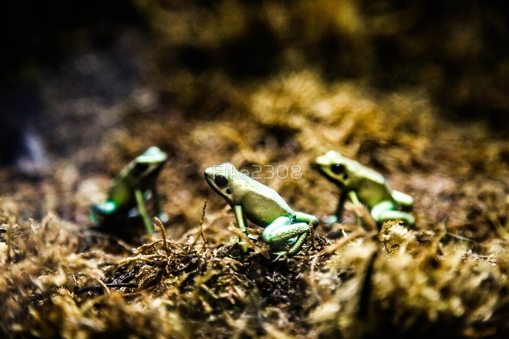 Poisonous Frogs by Fike2308
