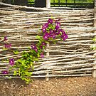 Country Fence by Marilyn Cornwell