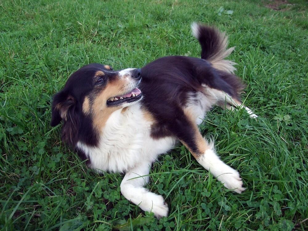 Lassie by John Quinn