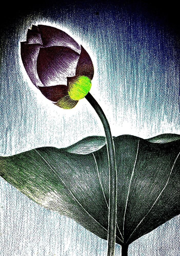 Lotus 6 by pracha