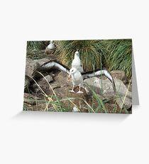 Black Browed Albatross Greeting Card