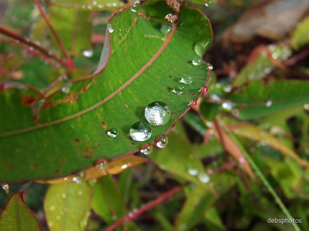 """""""Rain Drops"""" by debsphotos"""