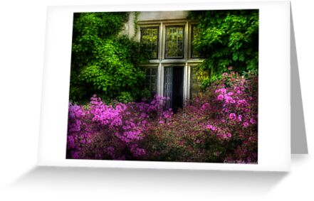 A window by Michael Savad