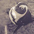 Adorable African Penguin Series 3 of 4 by lightwanderer