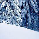 Wonderful Snow by Imi Koetz