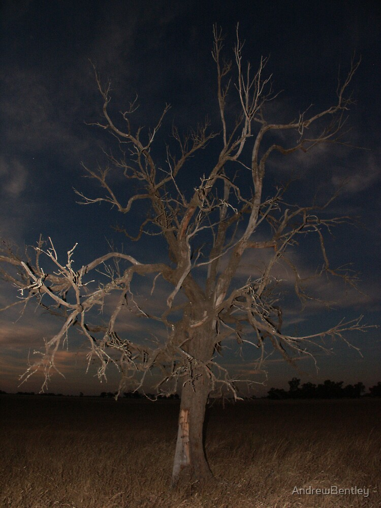 Deni Tree by AndrewBentley