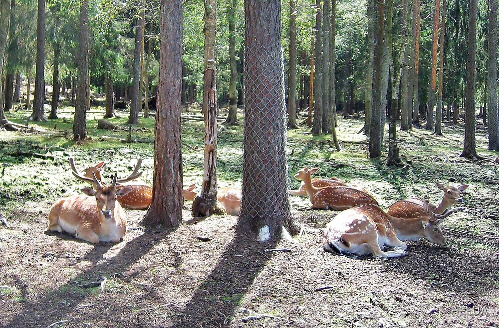 Just Resting Deer by HELUA