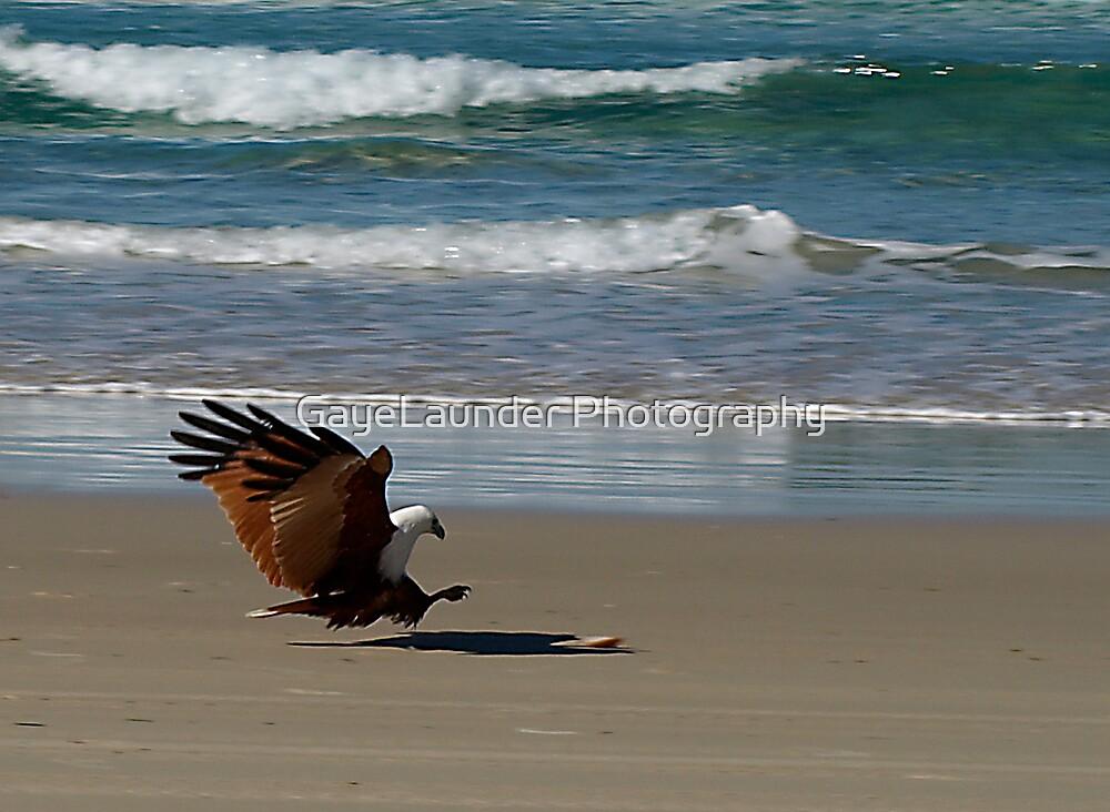 Sea Eagle by GayeLaunder Photography