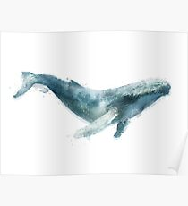 Humpback Whale Poster