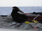 wild bird on boat out at sea by nicoleo13