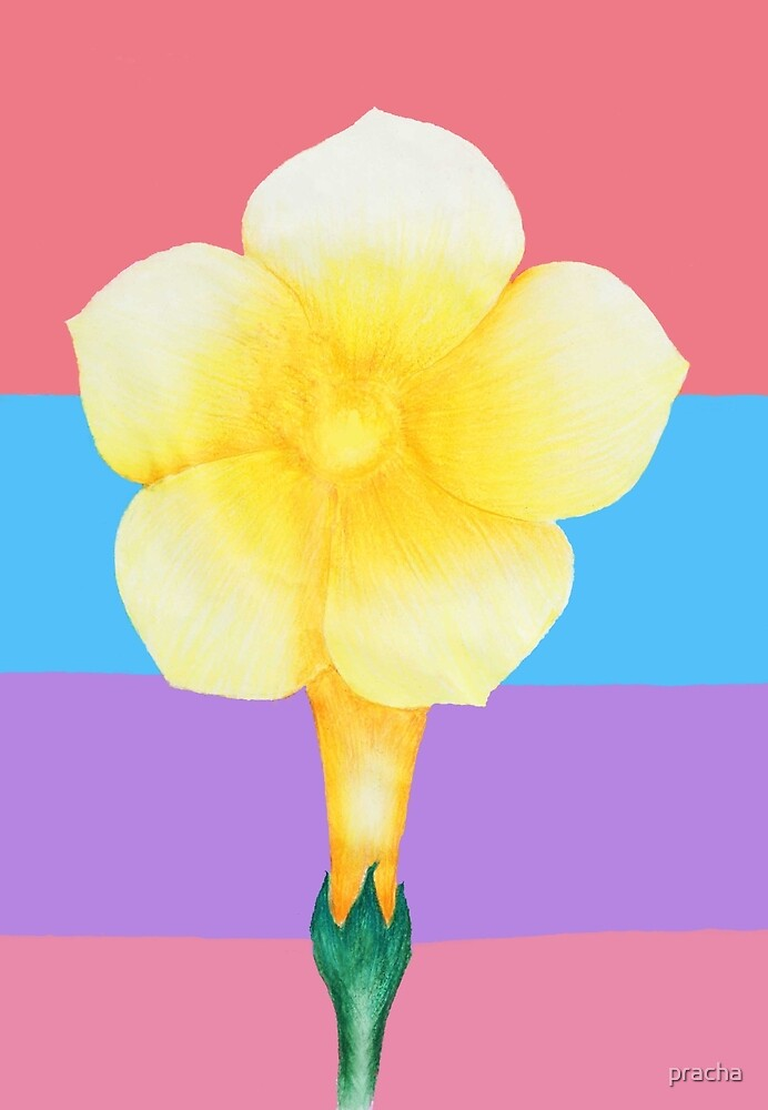 yellow Flower 2 by pracha