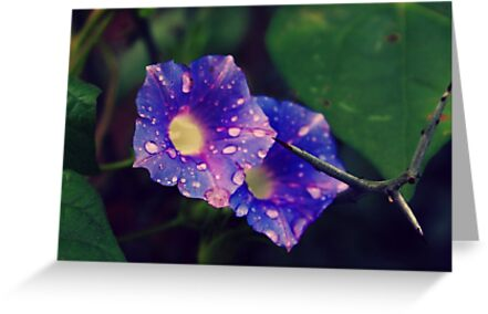 Morning Glories by AprilDawn