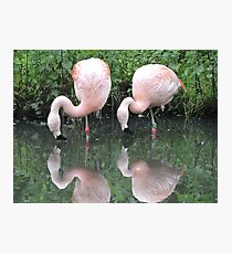 Duet Reflected Photographic Print