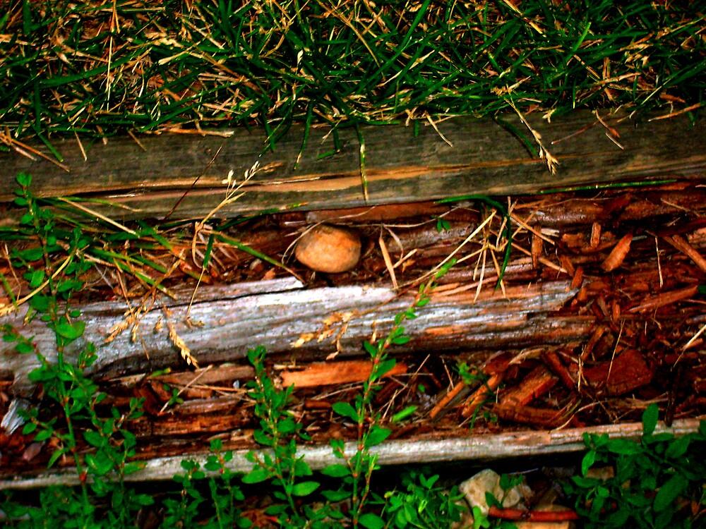 in the grass by Jennifer  Hammann