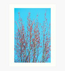 Spring Maple Trees Art Print