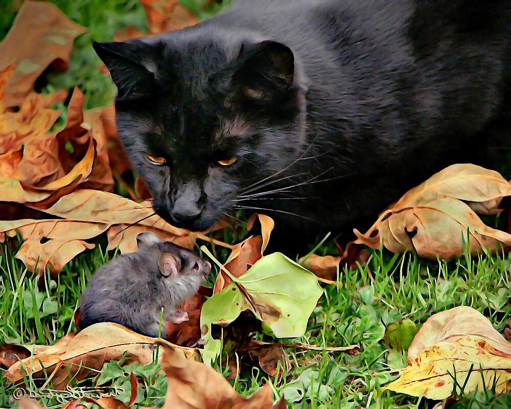 CAT MEETS RAT by Sandy Hill