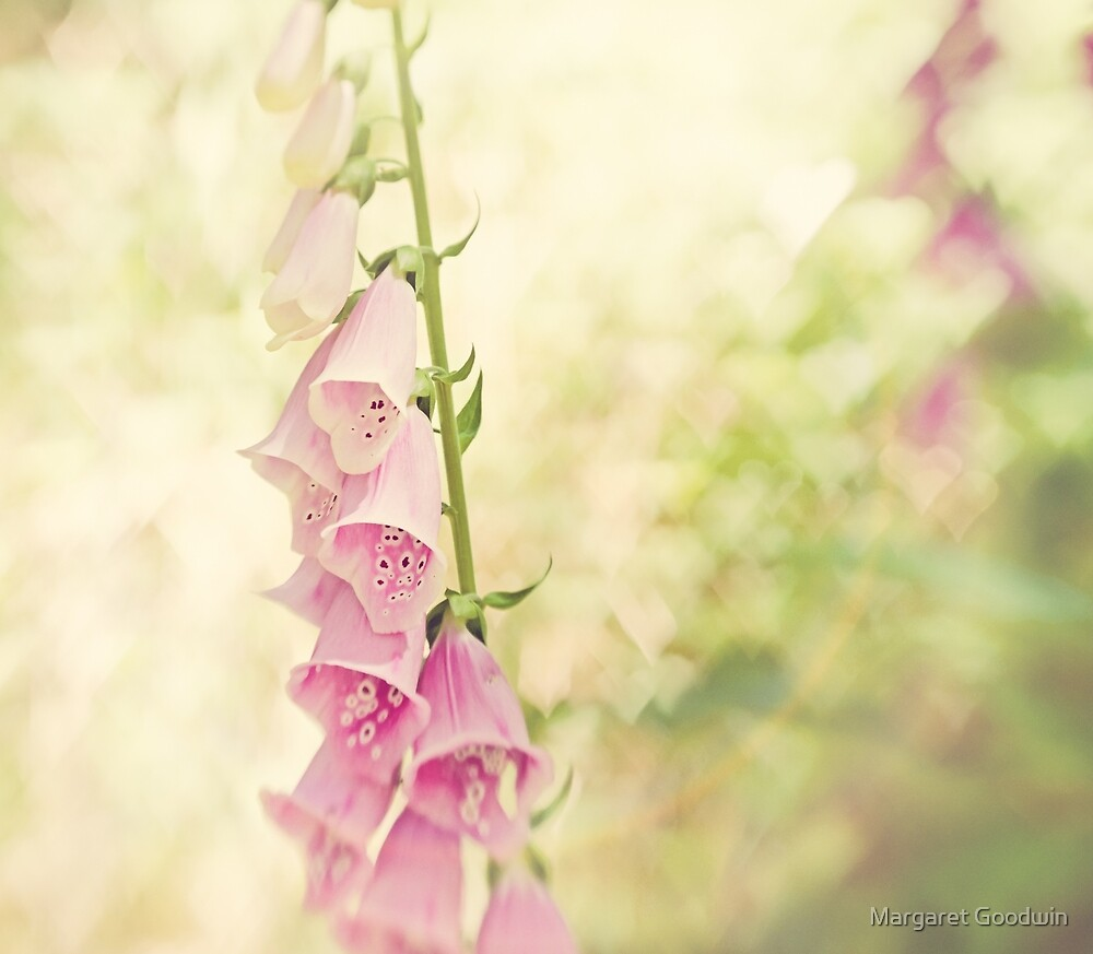 Foxglove Love by Margaret Goodwin