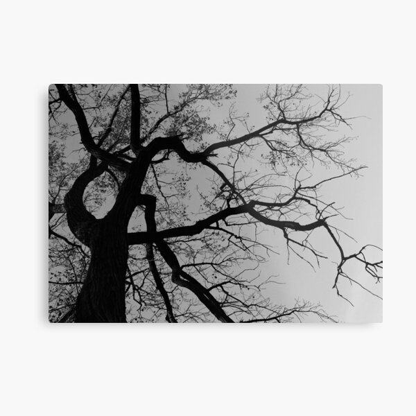 Look Up For The Poetry Metal Print
