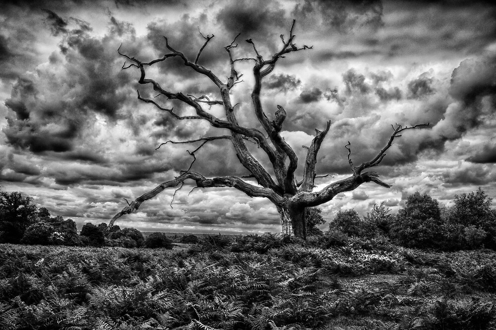 Tree Alone by Dave Godden