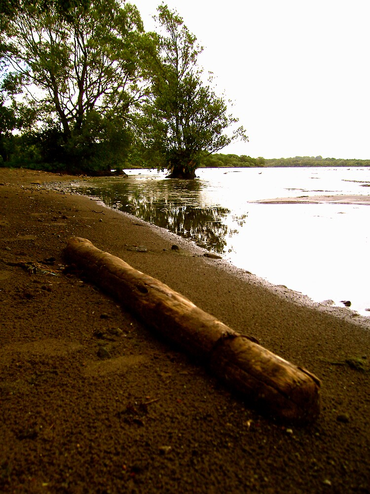lost log by SNAPPYDAVE