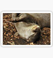 Playful otter Sticker