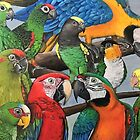 Macaws by Skye Tranter
