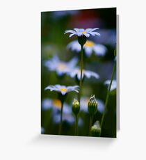 Reach for the sky.. Greeting Card