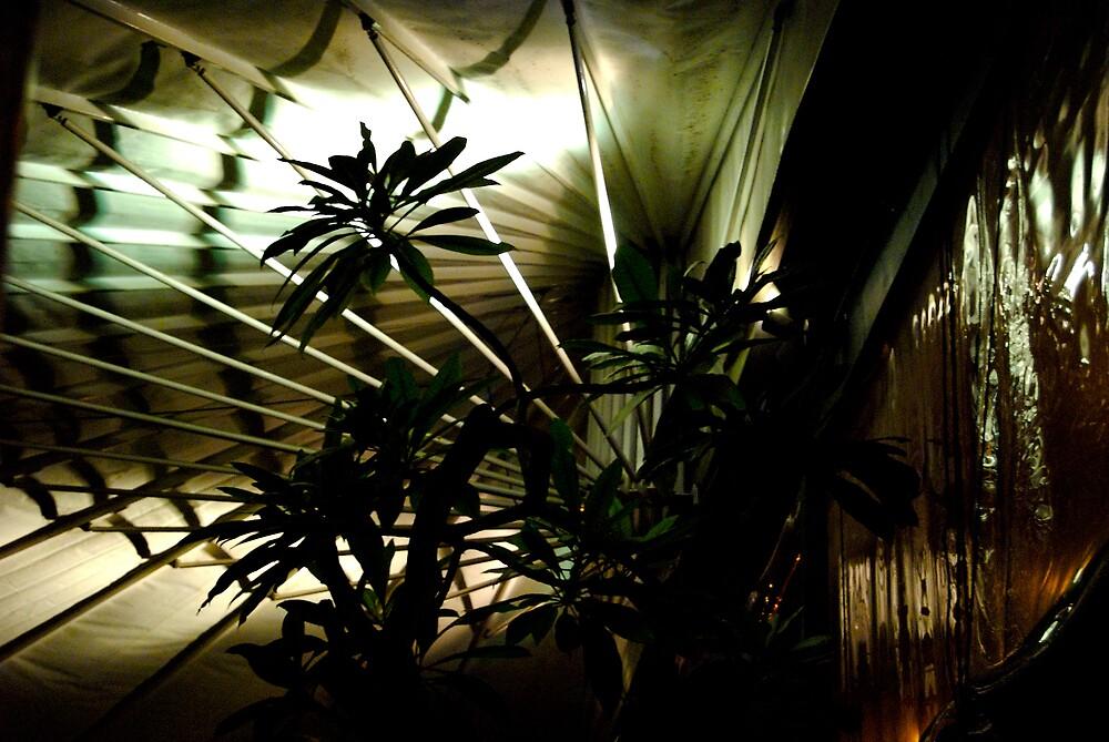 Bamboo Fan - Sihouette 05 by tano