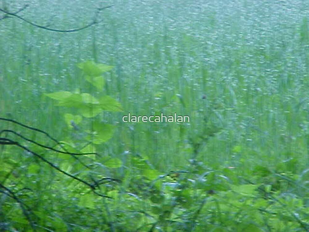 Sunlit, Escaped Seedling by clarecahalan
