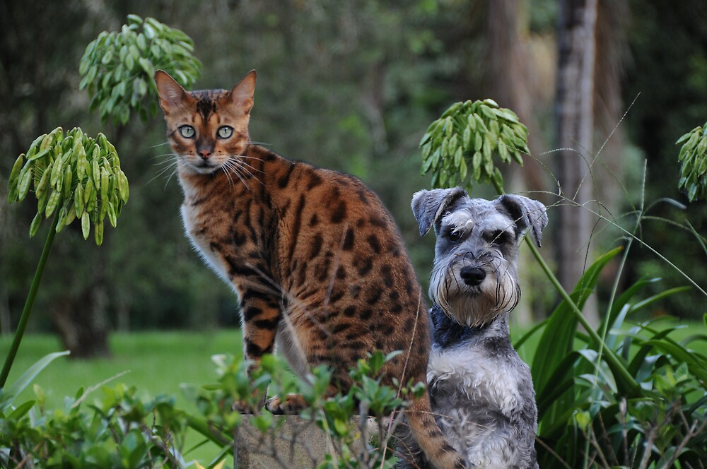 Dogs abd Cats by Shane  Caulfield