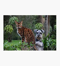 Dogs abd Cats Photographic Print