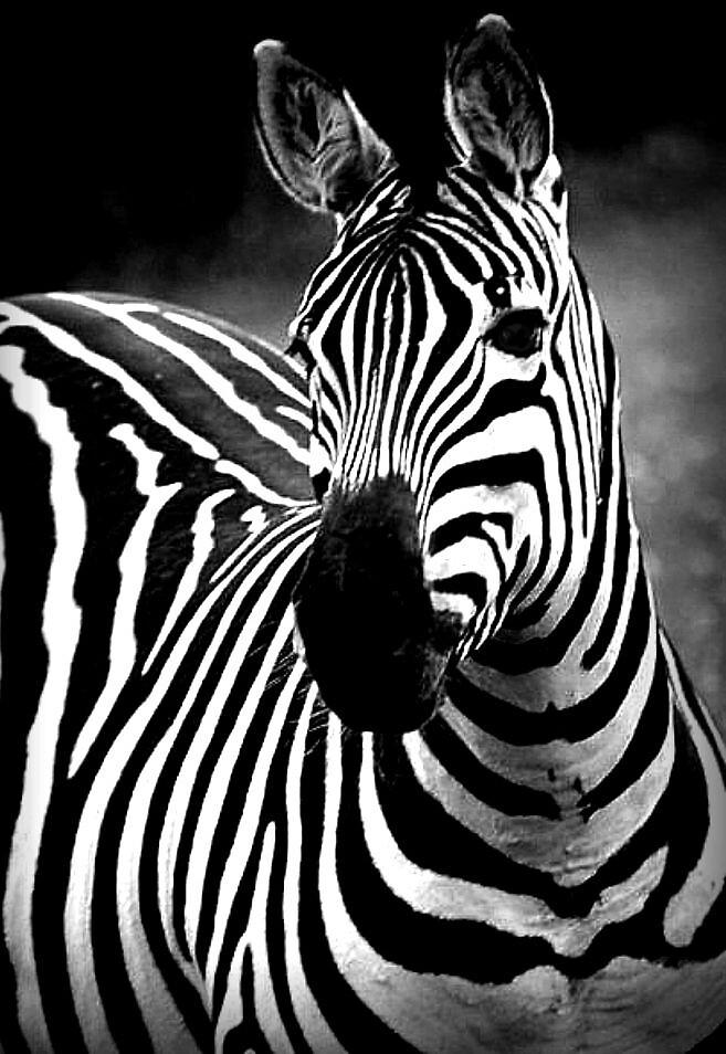 stripes by clare scott