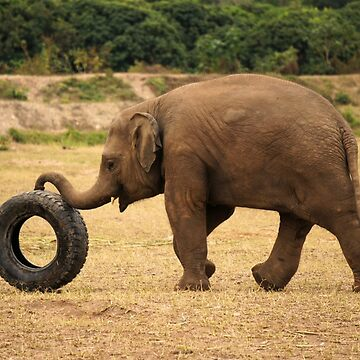 Elephant Playtime by jshap