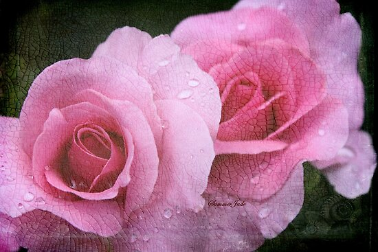 Raindrops on Roses ~ Yesterday's Tears by SummerJade
