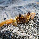 mr. krabbs by iamYUAN