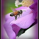 Honeybee on a Rose-of-Sharon by Deb  Badt-Covell