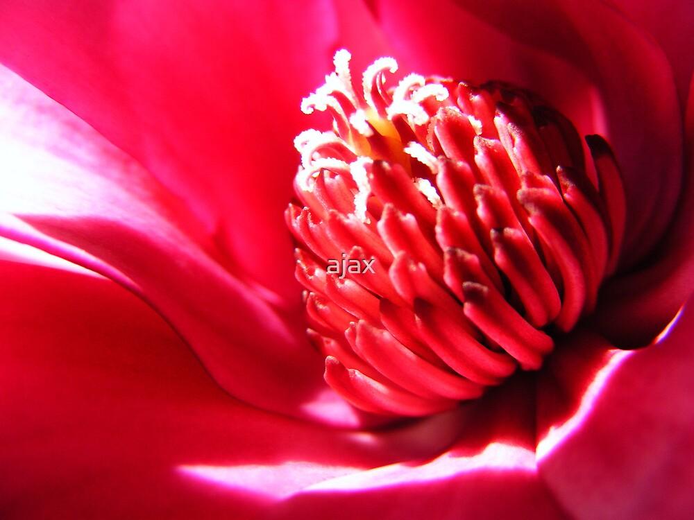 magnolia shine by ajax