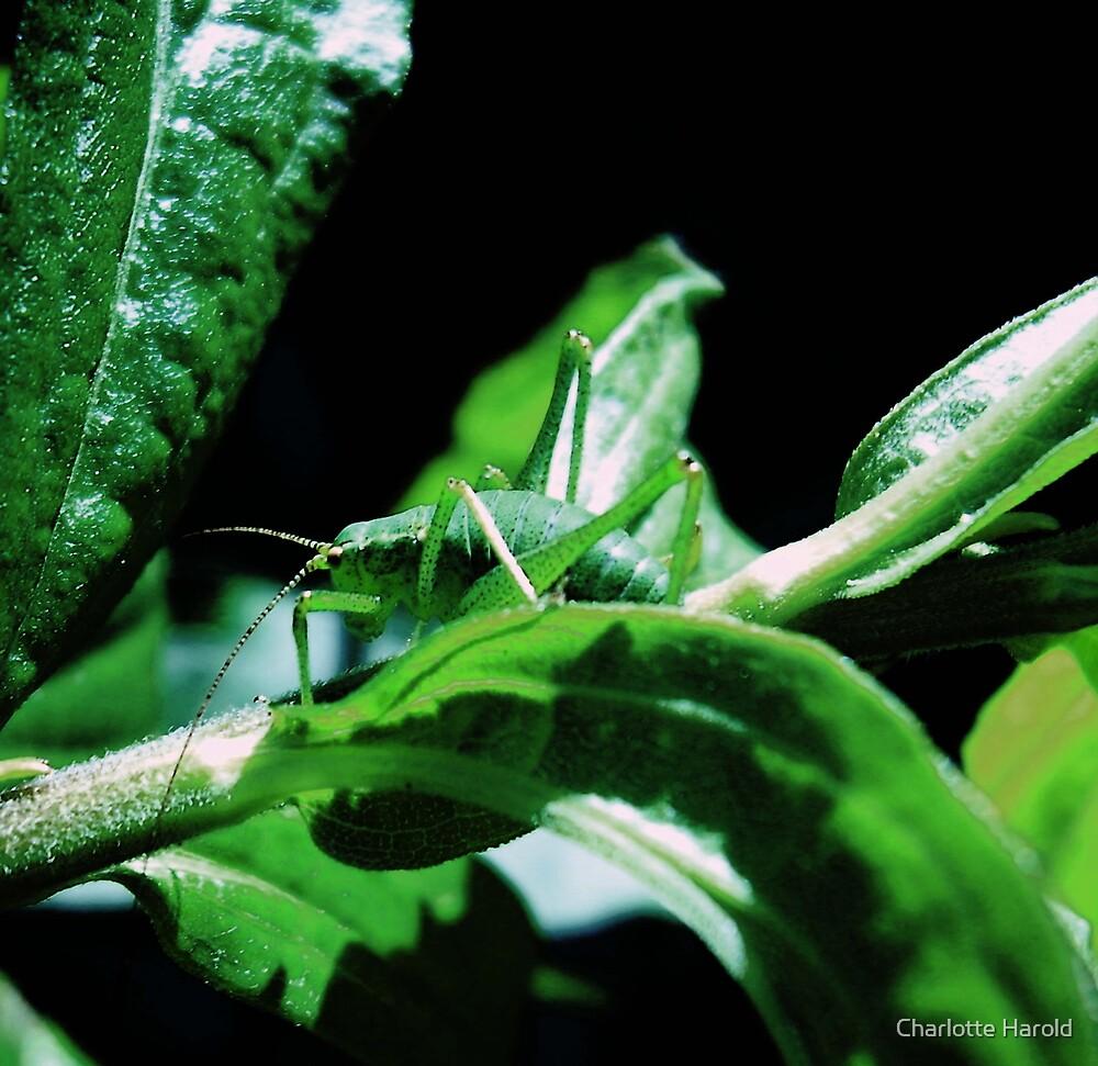 GreenBug by Charlotte Harold